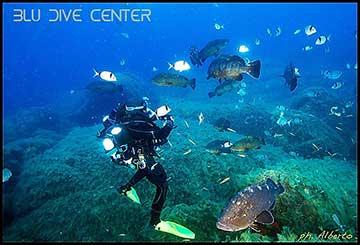 Recreational dives blu dive center santa teresa gallura - Dive center blu ...